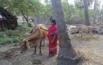 Improving Livelihood Through Milch Animals